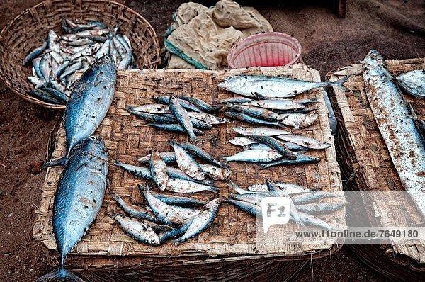 Blumenmarkt  Fisch  Pisces  Straße  verkaufen  voll  Indien  Orissa  Puri