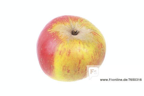 Apfel der Apfelsorte Papeleus Rambur