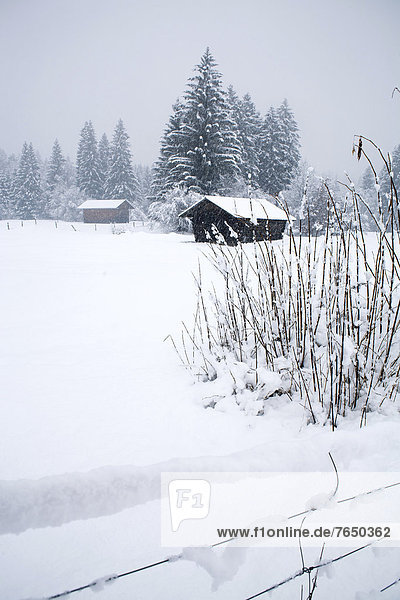 Snow-covered log cabin  Garmisch-Partenkirchen  Bavaria  Germany  Europe