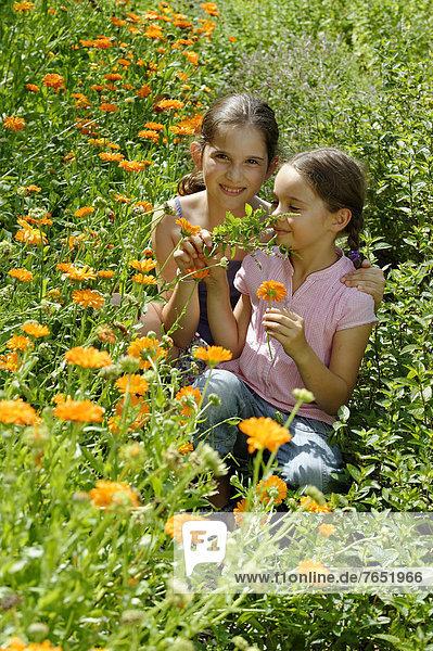 Europa  Wiese  Mädchen  Ringelblume  Calendula officinalis  Deutschland  Oberbayern