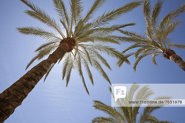 Europa  Andalusien  Marbella  Spanien