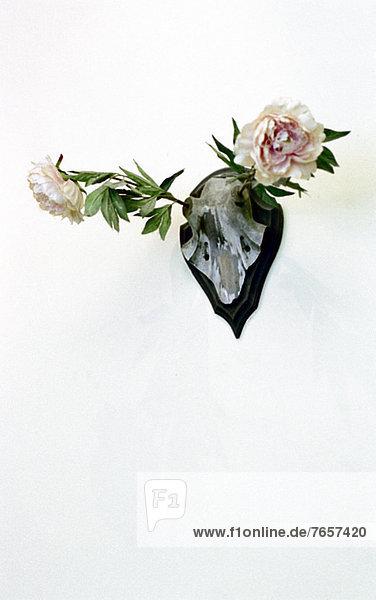 Tierschädel mit zwei Rosen an Stelle des Geweihs