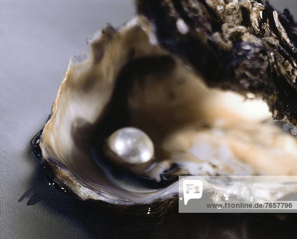 Geöffnete Auster mit Perle - Muschel - Delikatesse - Besonderheit