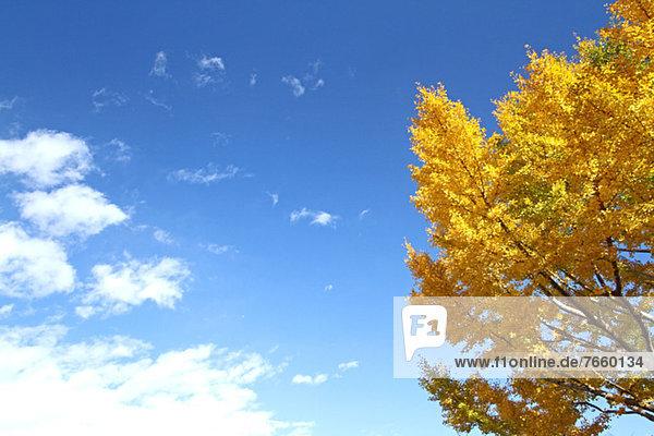 Wolke Himmel blau