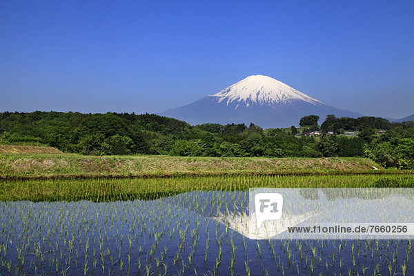 Mount Fuji reflected in a rice field