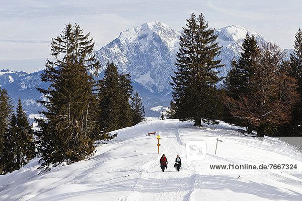 Winterwandern am Toten Mann  hinten Hoher Göll  Aussichtsgipfel im Skigebiet Schwarzeck bei Ramsau  Berchtesgadener Land  Bayern  Deutschland  Europa
