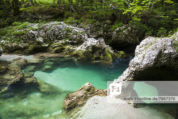 Sloncek - der Elefant  natürliche Formation in der Mostnica-Klamm  Nationalpark Triglav  Slowenien  Europa