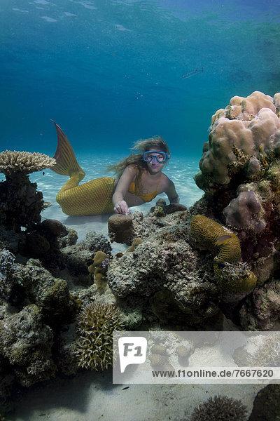 Meerjungfrau  junge Frau im Meerjungfrauenkostüm taucht im flachen Wasser einer Lagune