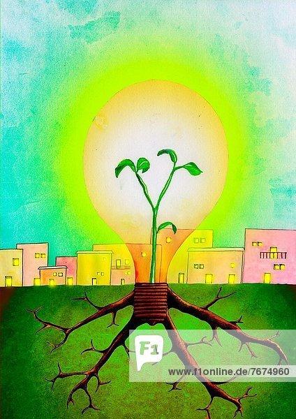 Beleuchtung  Licht  Wachstum  Pflanze  innerhalb  Blumenzwiebel
