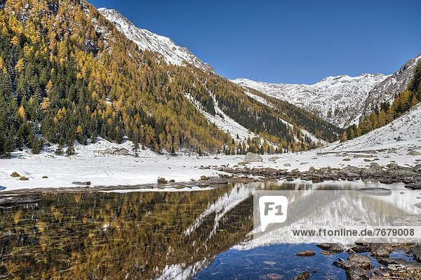 europäisch Wald Norwegen Herbst Fichte Lärche Italien Lombardei
