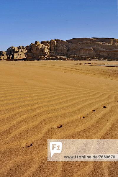 Wüste  Fuchs