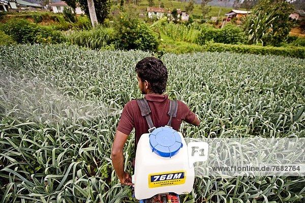 benutzen  Wachstum  Bauer  Student  Lauch  Schädlingsbekämpfung  Asien  Sri Lanka