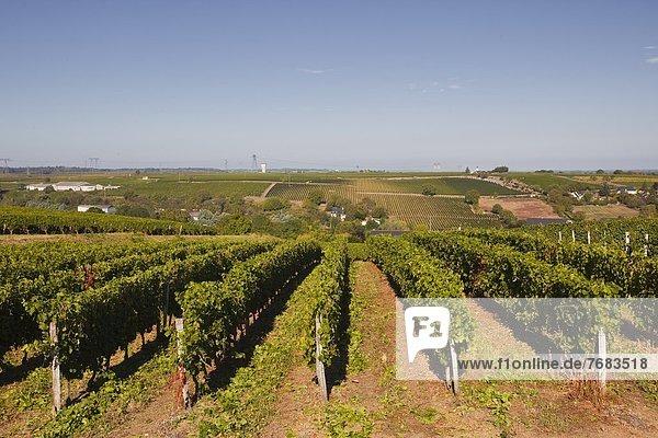 Frankreich  Europa  Wachstum  Weintraube  Weinberg