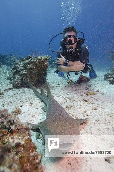 nahe  Karibik  Westindische Inseln  Mittelamerika  Turks- und Caicos-Inseln  Riff  Hai
