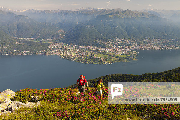 Man and a woman hiking amidst blooming rhododendron on Monte Covreto  overlooking lake Lago Maggiore towards the Maggia delta  Ascona and Locarno  Ticino  Switzerland  Europe