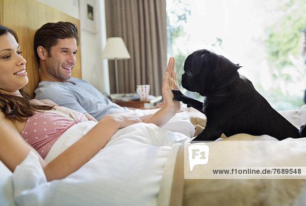 Frau unterrichtet Hund'high five' im Bett
