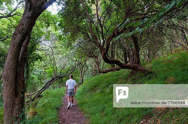 Man walking in the forest. Asturias  Spain.