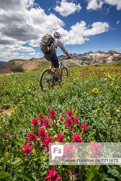 Mountainbiker auf grünem Weg