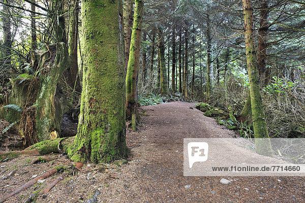 bedecken  folgen  Baum  ungestüm  Insel  Pazifischer Ozean  Pazifik  Stiller Ozean  Großer Ozean  britisch  Kanada  Moos  Ucluelet  Vancouver