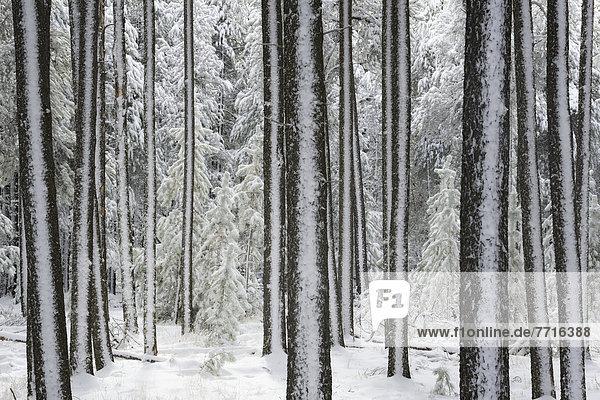 Winter  Hügel  Ländliches Motiv  ländliche Motive