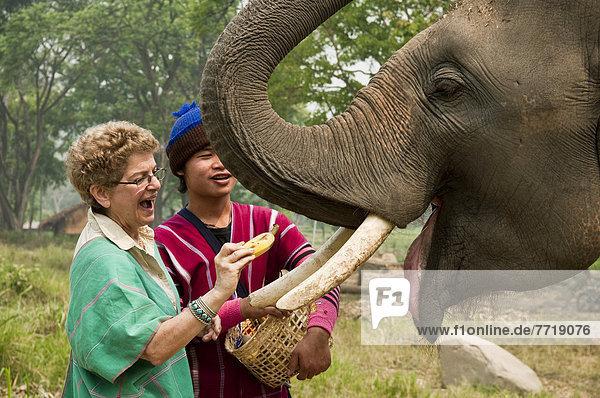 Frau  Mann  Senior  Senioren  Elefant  füttern  jung  Thailand