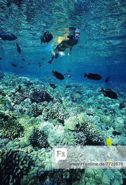 Hawaii  Big Island  Hawaii