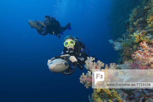 Farbaufnahme  Farbe  Unterwasseraufnahme  Kickboard  Taucher  Mikronesien  Weichheit