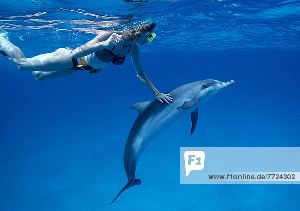 Delphin Delphinus delphis Karibik Atlantischer Ozean Atlantik Punkt schnorcheln Dalbe Schnorchler