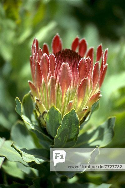 aufmachen  Blume  rot  1  Stängel  Baumstamm  Stamm
