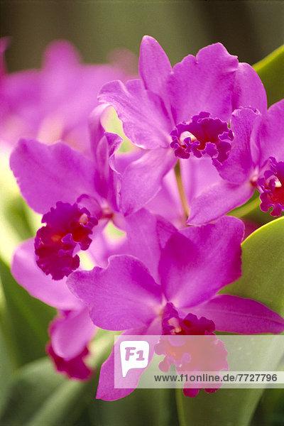 hoch  oben  nahe  lila  Pflanze  Orchidee  Größe