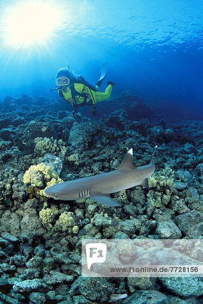 Hawaii  Riff  Hai