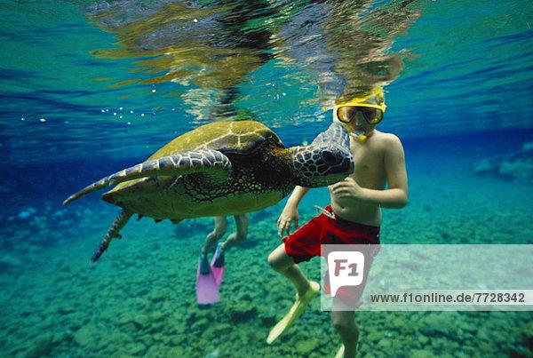 Wasserschildkröte Schildkröte Junge - Person grün seicht Hawaii Riff