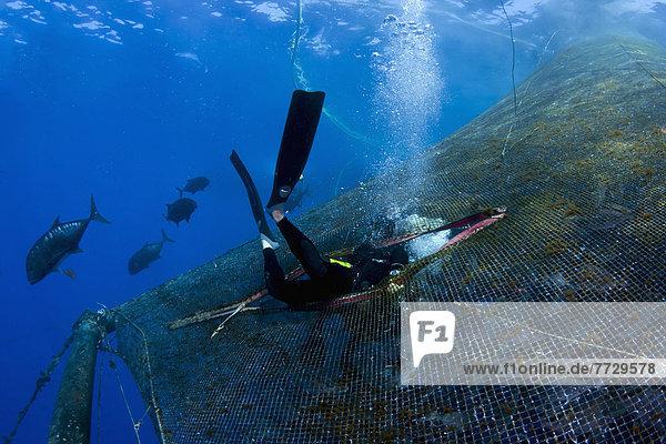 Hawaii  Big Island  Stift  Stifte  Schreibstift  Schreibstifte  Fisch  Pisces  reinkommen  Bauernhof  Hof  Höfe  füllen  füllt  füllend  Hawaii