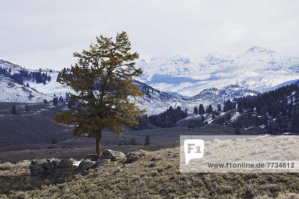 Berg  Baum  Seitenansicht  Einsamkeit  Yellowstone Nationalpark