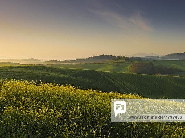 Lush rolling hills at sunrise Tuscany italy