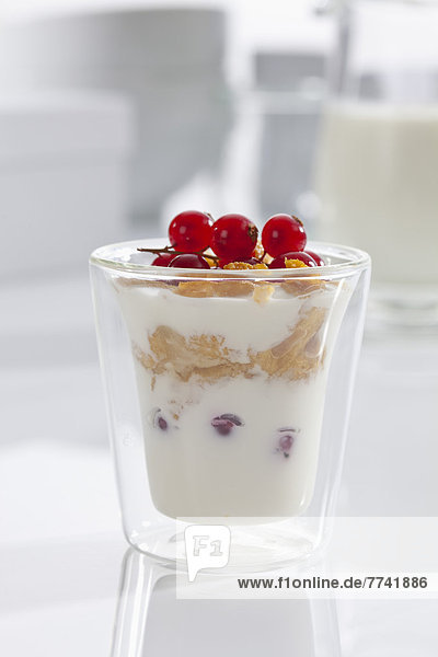 Glas Joghurt mit Müsli  Cornflakes und roten Johannisbeeren auf weißem Grund  Nahaufnahme