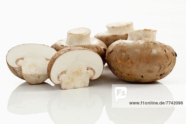 Braune Pilze auf weißem Grund  Nahaufnahme