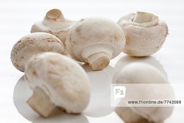 Pilze auf weißem Hintergrund  Nahaufnahme