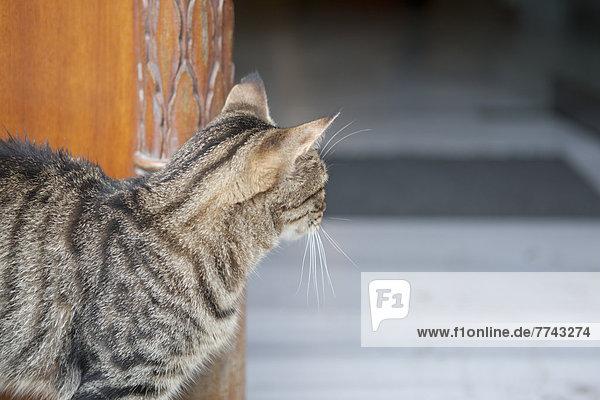 Türkei  Istanbul  Katze blickt durch den Hauseingang