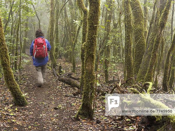 Spanien  La Gomera  Reife Frau beim Wandern durch den Nebelwald
