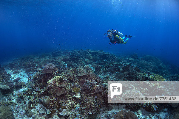 Scuba diver diving at a coral reef