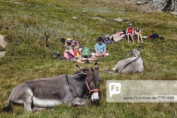 Mittagspause  Eselswanderung im Queyras  Alpen Mittagspause, Eselswanderung im Queyras, Alpen