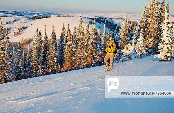 Hecht  Esox lucius  hoch  oben  Felsbrocken  Berg  über  Bach  Schlucht  Gans  Hecht  Schneeschuhlaufen