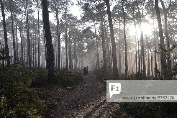 Wanderer in nebligem Herbstwald mit Eichen und Kiefern
