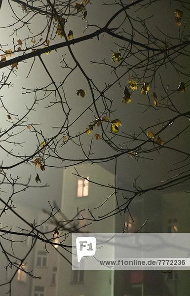 Zweige eines kahlen Baumes mit Gebäuden im Hintergrund am nebligen Herbstabend