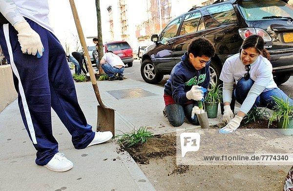 Vereinigte Staaten von Amerika  USA  New York City  Tag  Blume  Weg  Hispanier  Großstadt  Pflanze  Kirche  Gemeinschaft  Freiwilliger  öffentlicher Ort  Dienstleistungssektor  Harlem  Manhattan  neu  spanisch