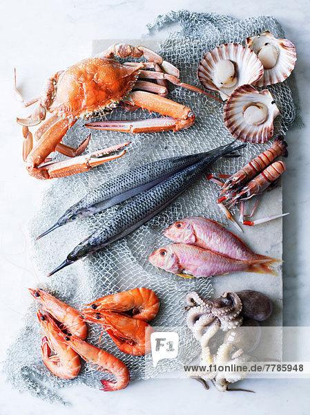 Auswahl an frischen Meeresfrüchten