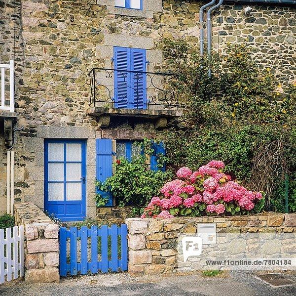 Frankreich Blume Wohnhaus blau Jalousie Bretagne Hortensie