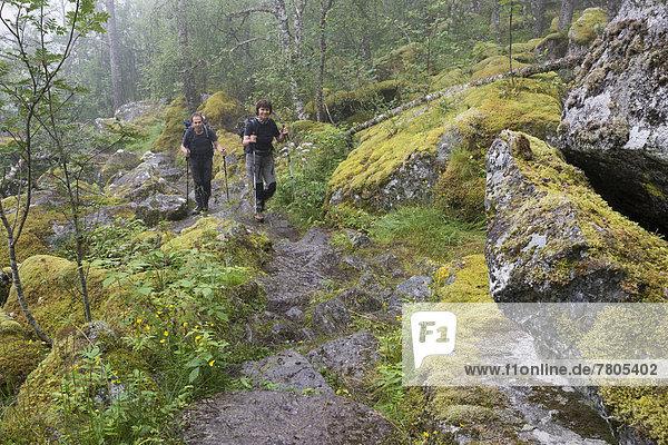 Wanderer steigen auf einem Gebirgspfad zur Hochebene Hardangervidda auf  bemooste Felsblöcke