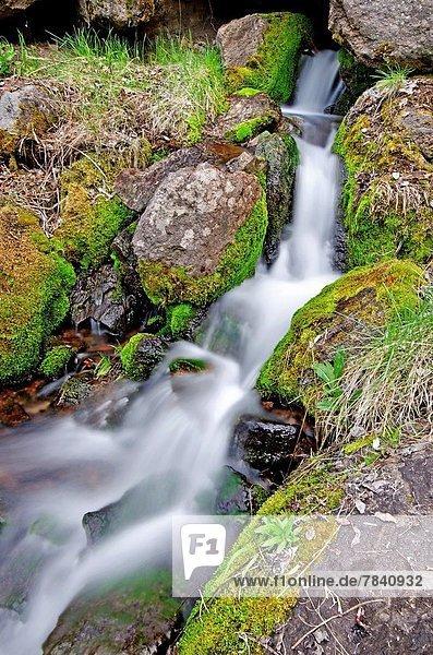 Felsbrocken Berg über Ereignis Bach Holzschuh Steinschlag Moos Gans